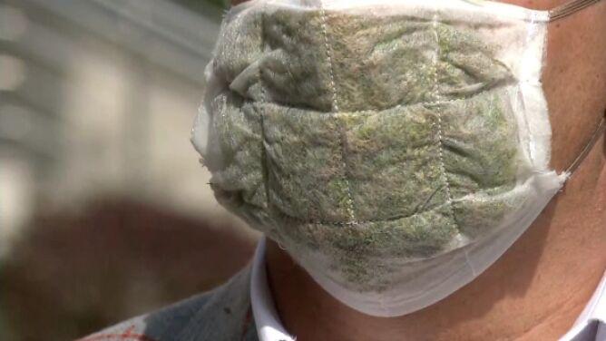 Badacze SGGW stworzyli maseczkę z filtrem z żywych roślin