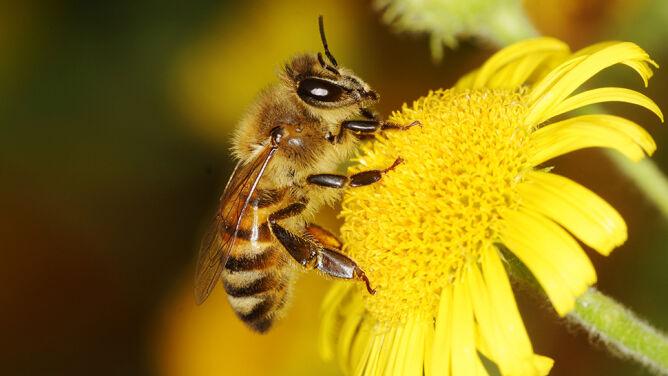 """Nowy sposób walki z pleśnią. Lepszy od oprysków, bo """"pszczoły znajdą każdy kwiat"""""""
