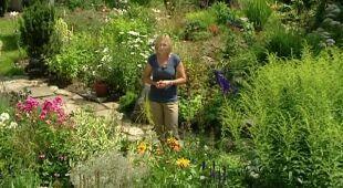 'Pszczelarnia' - ogród na brzegu górskiego strumienia, odc. 405